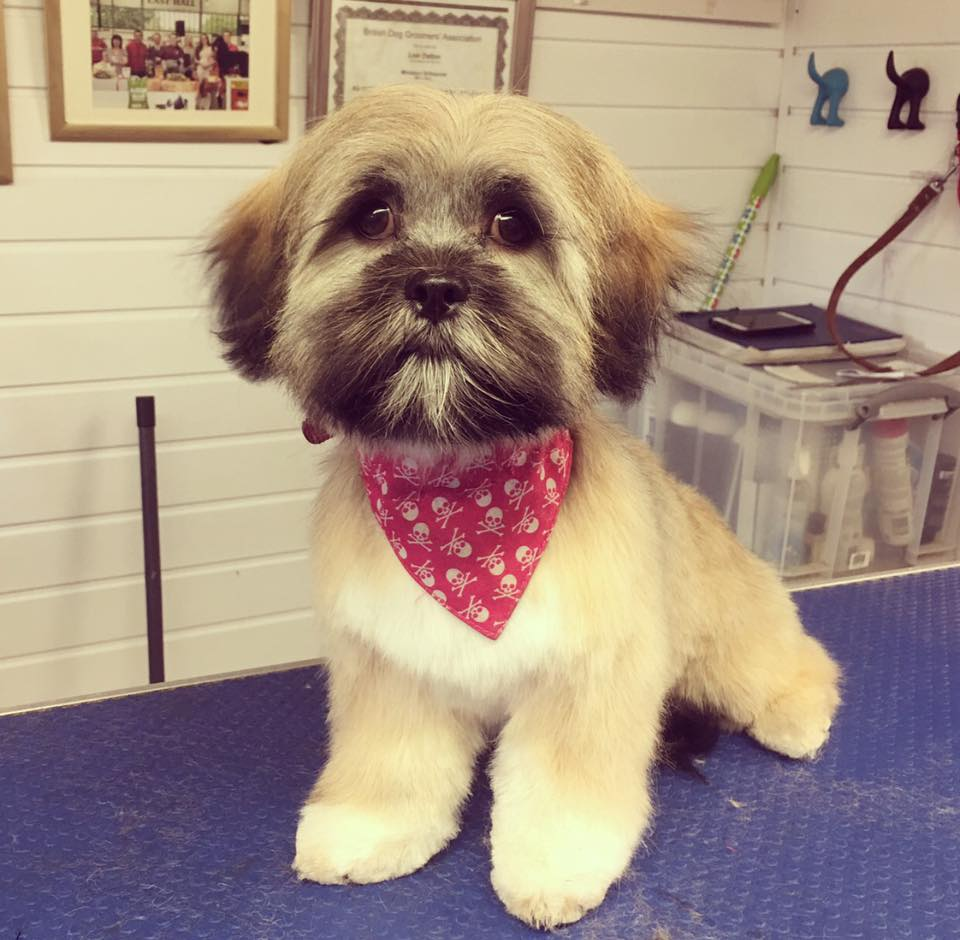 Dog Grooming Gallery Images Puppies And Dogs Helsby Runcorn