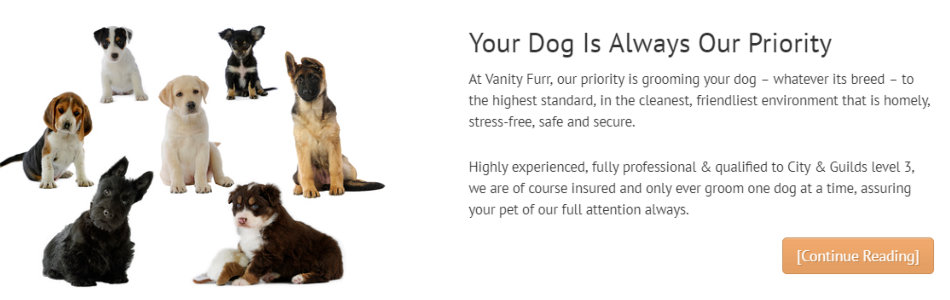 Your Dog Is Always Our Priority