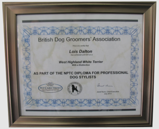 Runcorn Dog Grooming Services Wash And Groom Nail Clipping