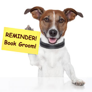 Book a groom with vanity Furr Dog Grooming
