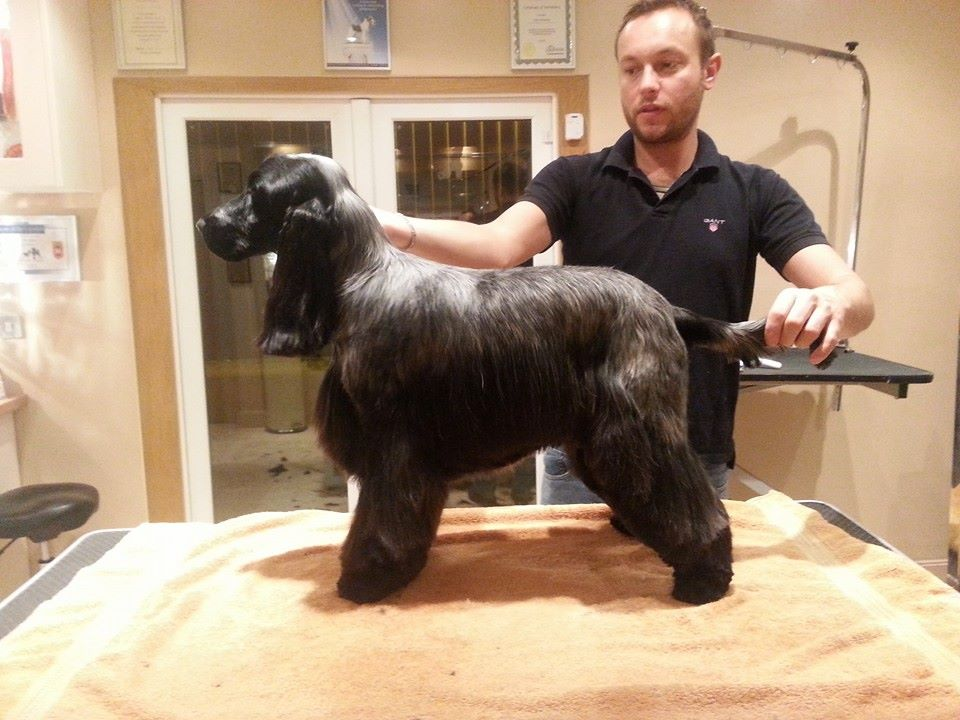 """A hand stripped """"Baker"""" with Groomer Of The Year Mike Wildman"""