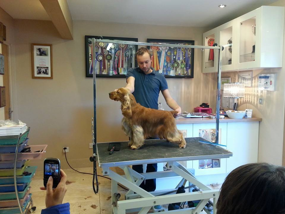 Dog grooming workshop day vanity furr dog grooming runcorn for A bath and a biscuit grooming salon