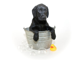 puppy-being-washed