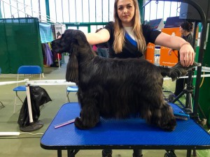 Master groom 2016 Gun Dog categorty